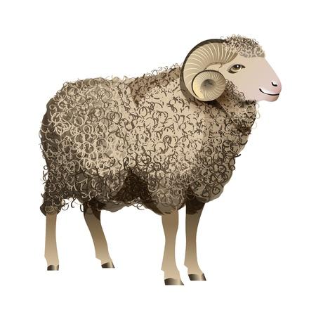 carnero: Ovejas realista