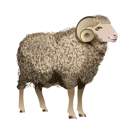 Realistic Sheep Stock Vector - 22794947