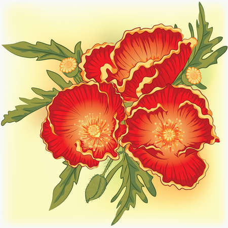 florescence: vector illustration bouquet of three red poppies Illustration