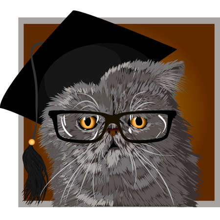 gato persa: Vector illustration of gray persian cat with glasses and cap graduate