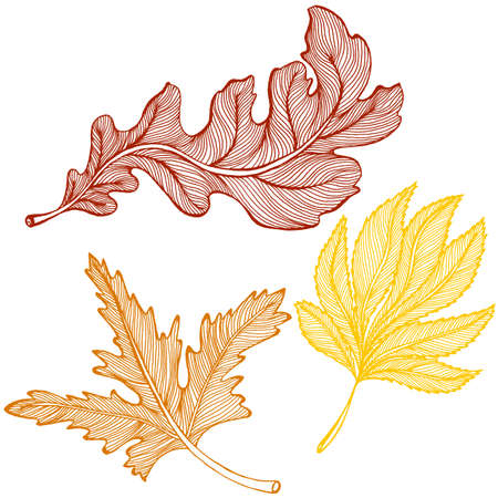 forest trees: Vector drawing of a set of autumn leaves
