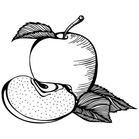 Vector monochrome outline drawing with apple fruits