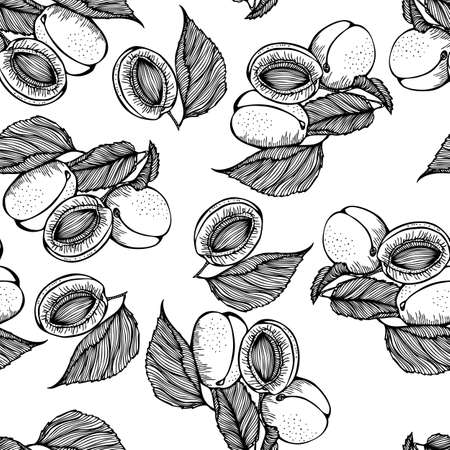 apricots: Vector monochrome seamless pattern of apricots on white background Illustration