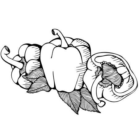 paprika: Monochrome vector drawing of paprika on white background