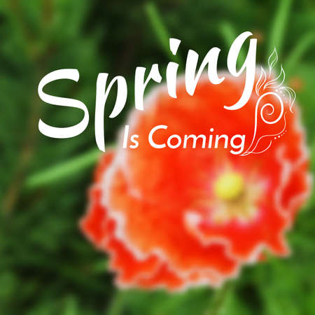 unfocused: blurred background with red poppy. Spring or summer design. Mesh blurred background. Illustration