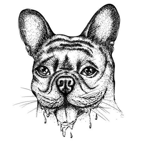 Bulldog  head illustration