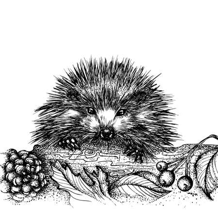 Portrait of a cute hedgehog climbing over a log. Vector hand drawn illustration. Monochrome drawing isolated on white background Foto de archivo - 126367893