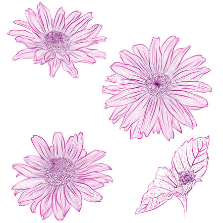 Vector illustration in line art style. Set of flowers of Heliopsis isolated on white background. Hand drawn botanical picture