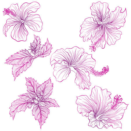 Vector illustration in line art style. Set of flowers of Hibiscus isolated on white background. Hand drawn botanical picture
