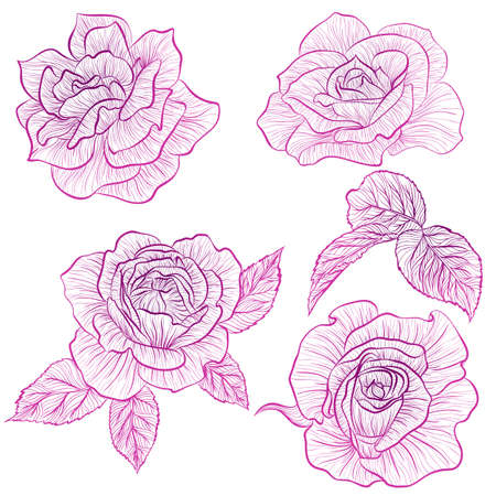 Vector illustration in line art style. Set of flowers of Roses isolated on white background. Hand drawn botanical picture