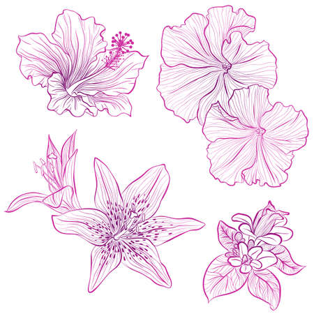 Vector illustration in line art style. Set of flowers of hibiscus, petunia, lily isolated on white background. Hand drawn botanical picture