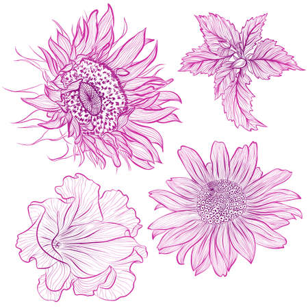 Vector illustration in line art style. Set of flowers of sunflower, petunia, heliopsis isolated on white background. Hand drawn botanical picture Illustration