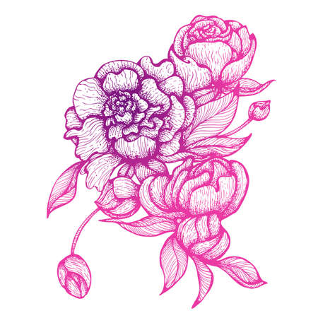 Vector illustration in line art style. Bouquet of peony flowers isolated on white background. Hand drawn botanical picture