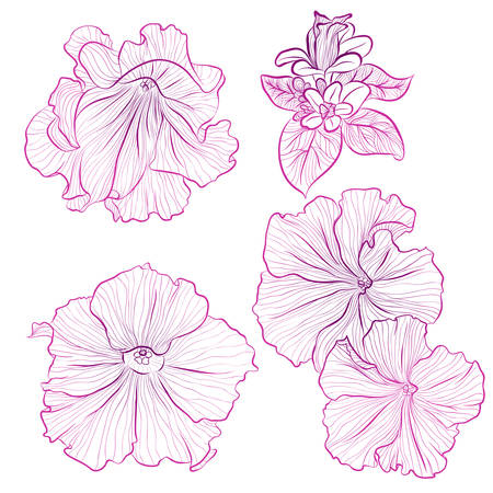 Vector illustration in line art style. Set of flowers of Petunias isolated on white background. Hand drawn botanical picture Illustration