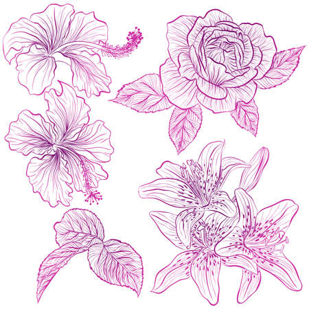 Vector illustration in line art style. Set of flowers of hibiscus, rose, lily isolated on white background. Hand drawn botanical picture