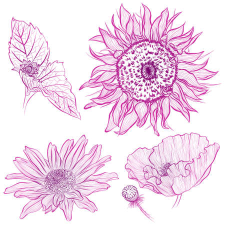 Vector illustration in line art style. Set of flowers of sunflower, rose, poppy isolated on white background. Hand drawn botanical picture Illustration