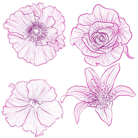 Vector illustration in line art style. Set of flowers of rose, poppy, petunia, lily isolated on white background. Hand drawn botanical picture