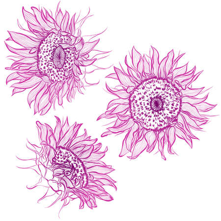 Vector illustration in line art style. Set of flowers of Sunflowers isolated on white background. Hand drawn botanical picture