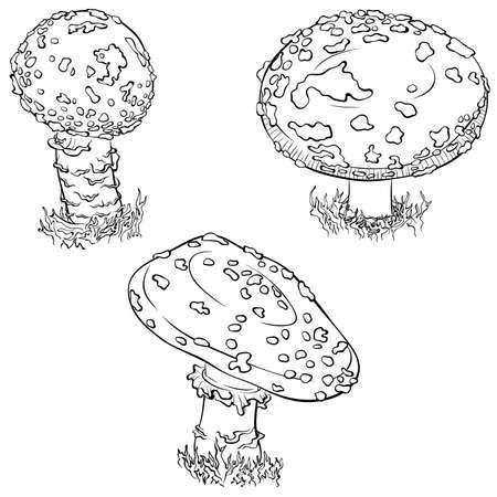 Fly agaric mushroom set