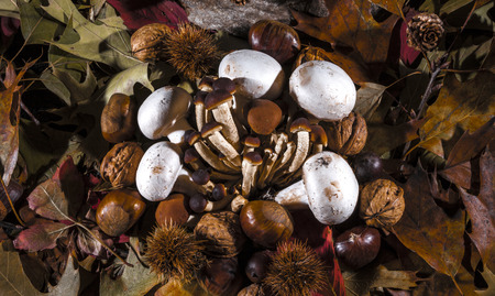 Autumnal still life composition with brown honey mushrooms, white champignon, green, yellow, brown, orange and red leaves, sprigs, dry fruits (chestnuts, chestnuts bur, walnuts and hazelnuts) and a stone. photo