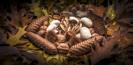 bur: Autumnal still life composition with brown honey mushrooms, white champignon, green, yellow, brown, orange and red leaves, sprigs, pine cones, dry fruits (chestnuts, chestnuts bur, walnuts and hazelnuts) and a stone. Black background. Stock Photo