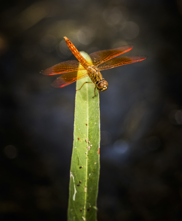Dragonfly on green grass in natural environment