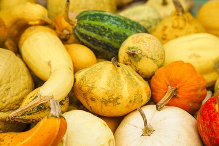 Different assortment of pumpkins of different colors