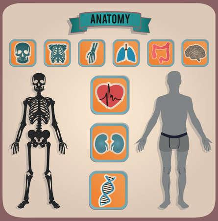 bowels: concept of anatomy - illustration