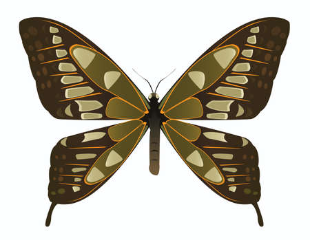 brown and green butterfly Vector