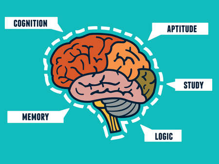 brain: Capabilities of the human brain. Mindmap and infocharts - vector illustration