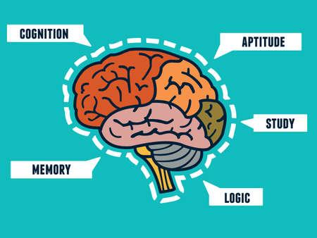 cerebro humano: Capacidades del cerebro humano. Mindmap y infocharts - ilustraci�n vectorial Vectores