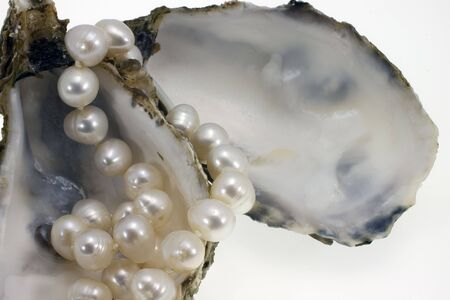the oysters and their nacre on white bottom photo