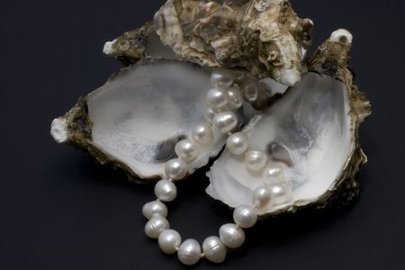 the oysters and their nacre on black bottom photo