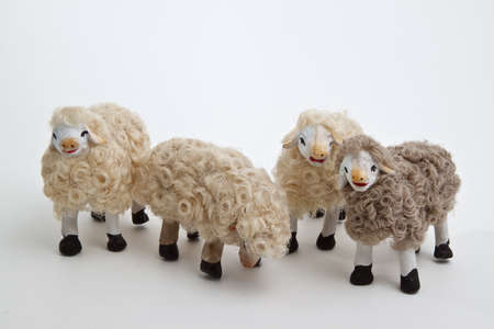 The sheep of the crib on the white background photo