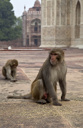 The monkeys in India photo