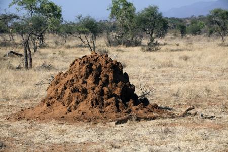 Termite mound in Safari in  Kenya