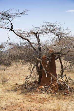 Termite mound in Safari in Kenya Stock Photo