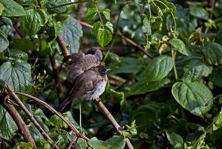 Exotic bird in Kenya