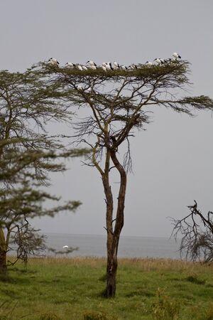 landscape of the savannah in Kenya Stock Photo