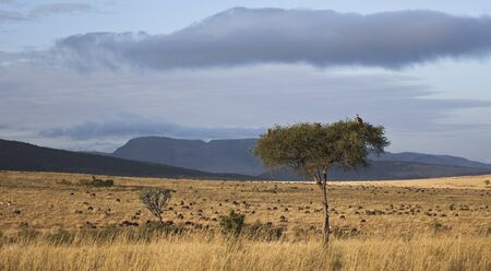 landscape of the savannah in Kenya photo