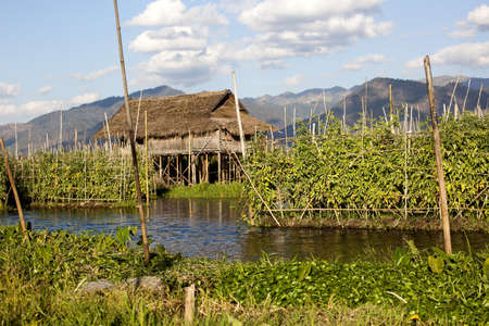 Myanmar, Inle lake, floating crops Stock Photo - 17831778