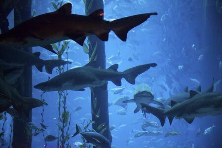 great marine Aquarius to Dubai Stock Photo