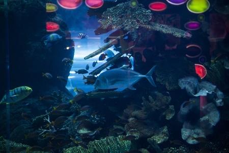 reefscape: great marine Aquarius to Dubai Stock Photo