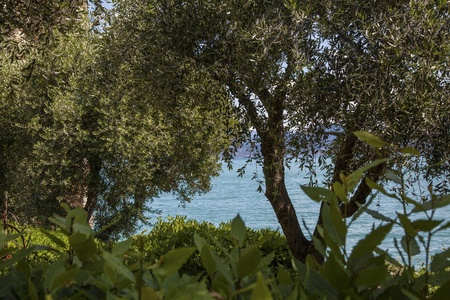 herbe: The garden to the lake in Italy