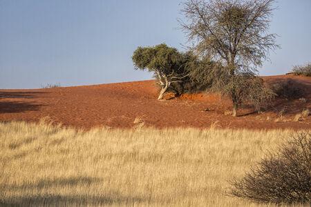 Panorama en Namibia, �frica. Desierto de Kalahari Foto de archivo
