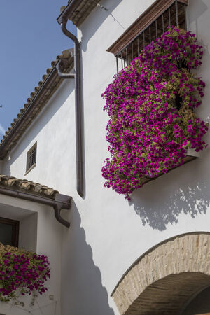 andalusia: Andalusia, alley and flowers Stock Photo