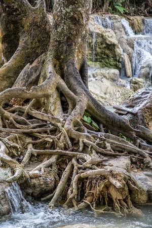 plantas en Laos Foto de archivo