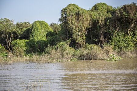 squalor: Cambodia, a vegetation on the Mekong river