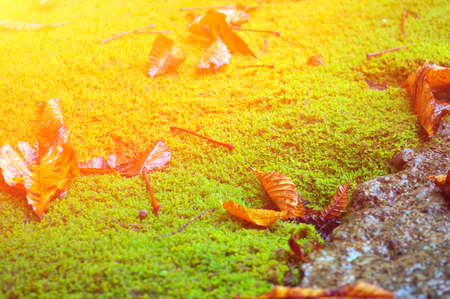 Leaves on Green Moss Stock Photo