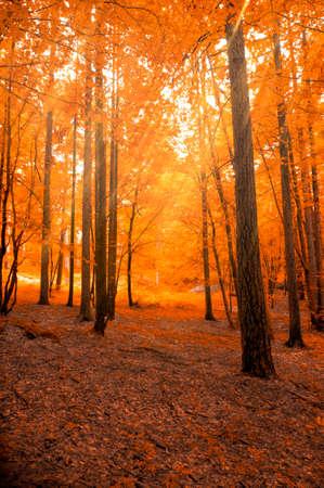 Austrian Forest in autumn